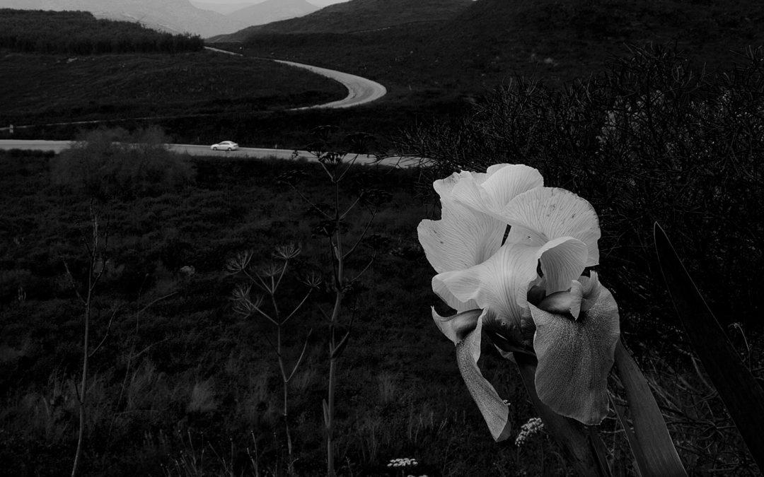 צילום בשחור-לבן: האם זו אמנות?