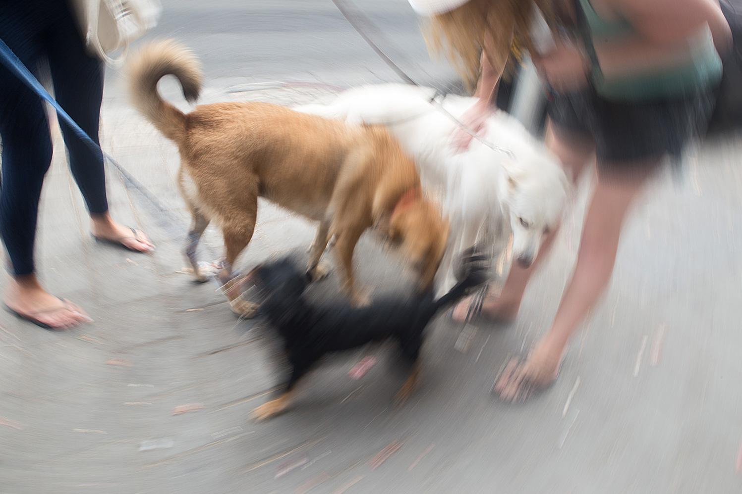 כלבים בפלורנטין, תל-אביב