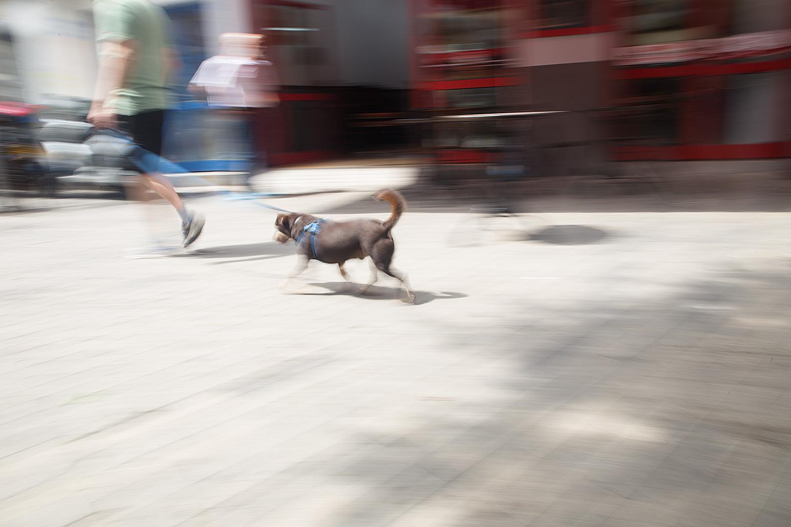 להוליך את הכלב. פלורנטין, תל אביב