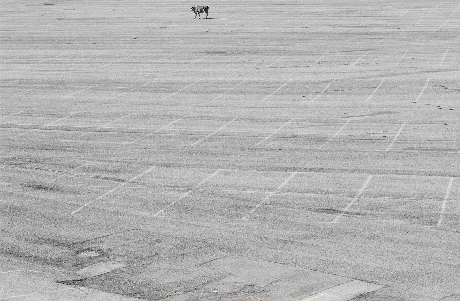 פלישה. ציון לשבח בתחרות Tokyo Foto Award 2018