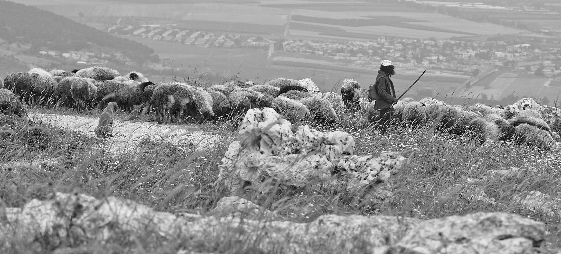רועים