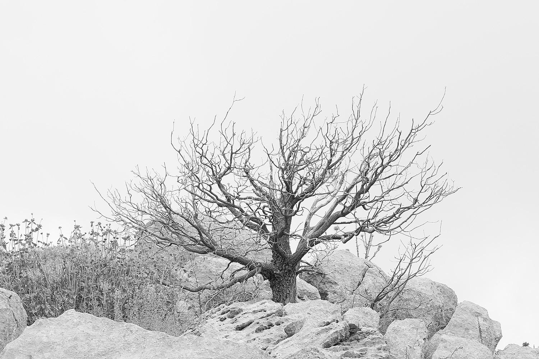 עץ אלון מת, בהר החרמון