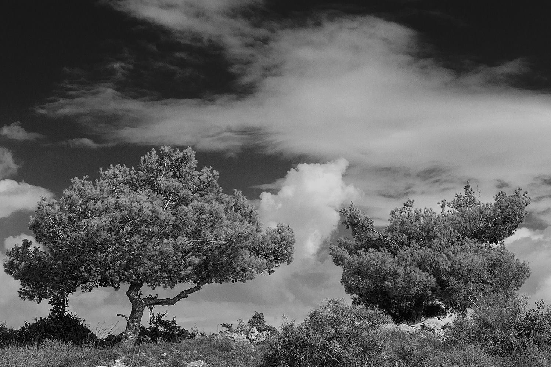 שני עצים ועננים בהרי יהודה