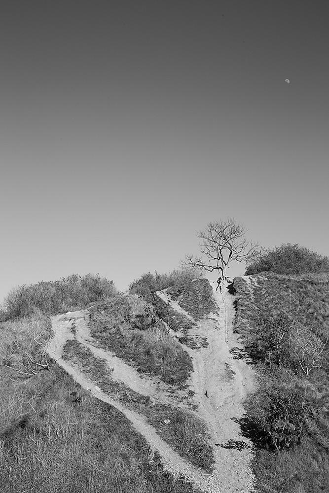 ירח זורח מעל גבעה ועץ