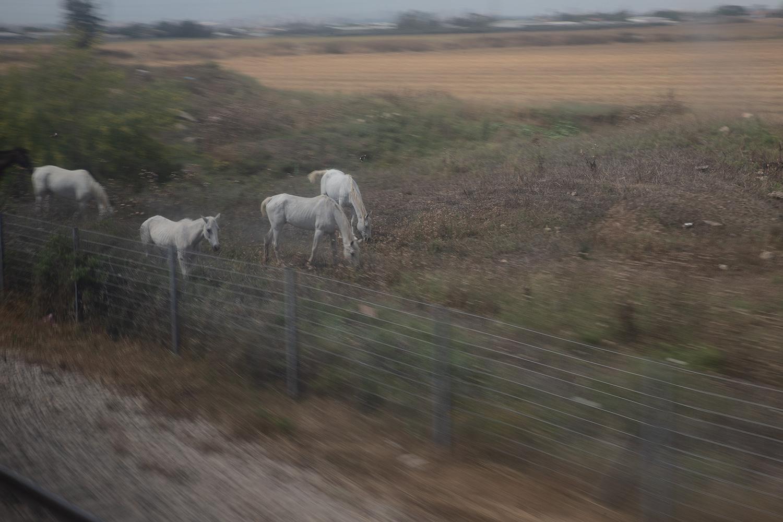 סוסים בשולי הדרך