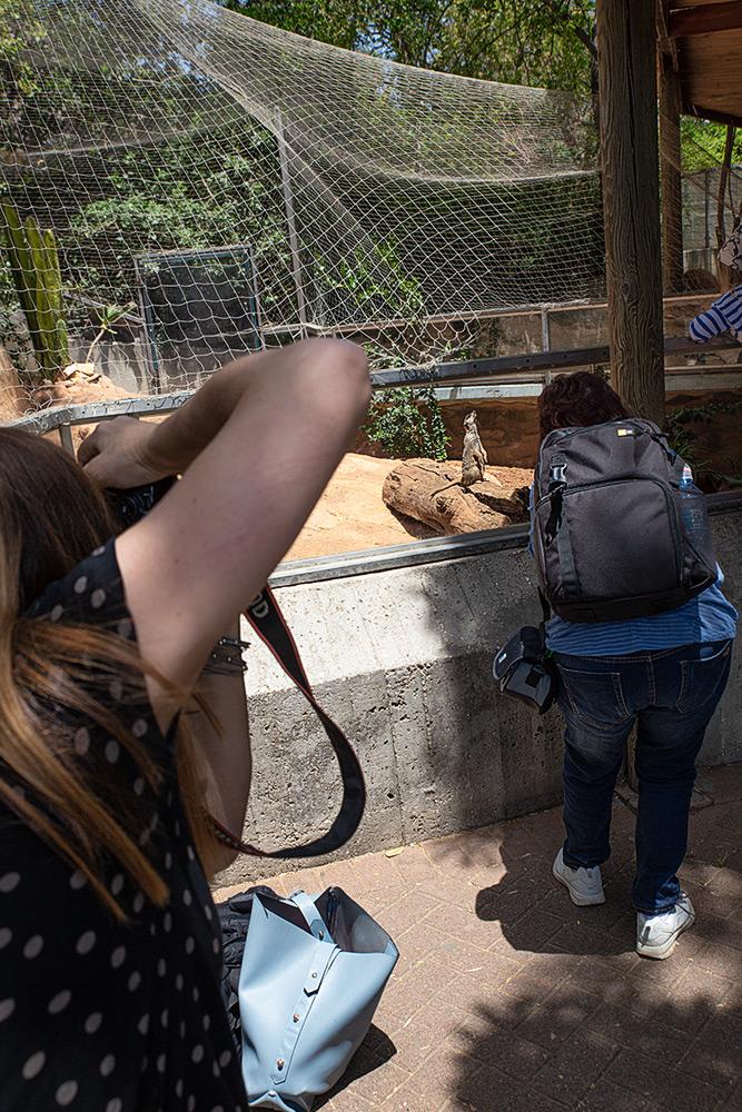 סדנת צילום בגני חיות