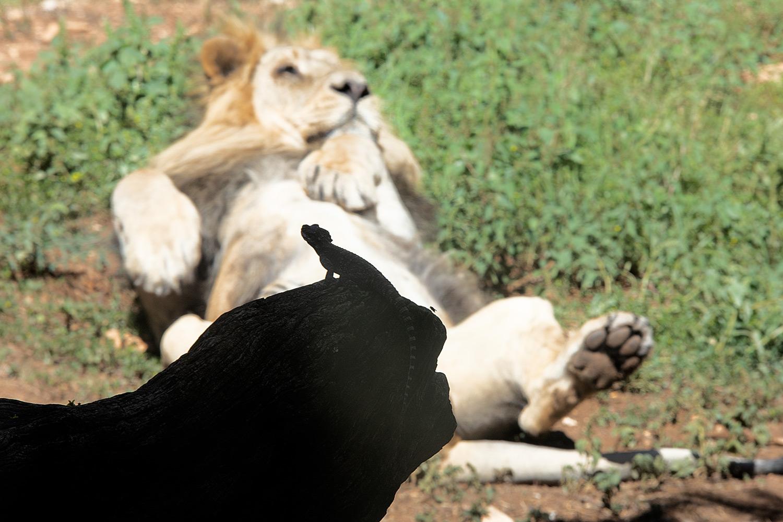 """גן החיות התנ""""כי בירושלים"""