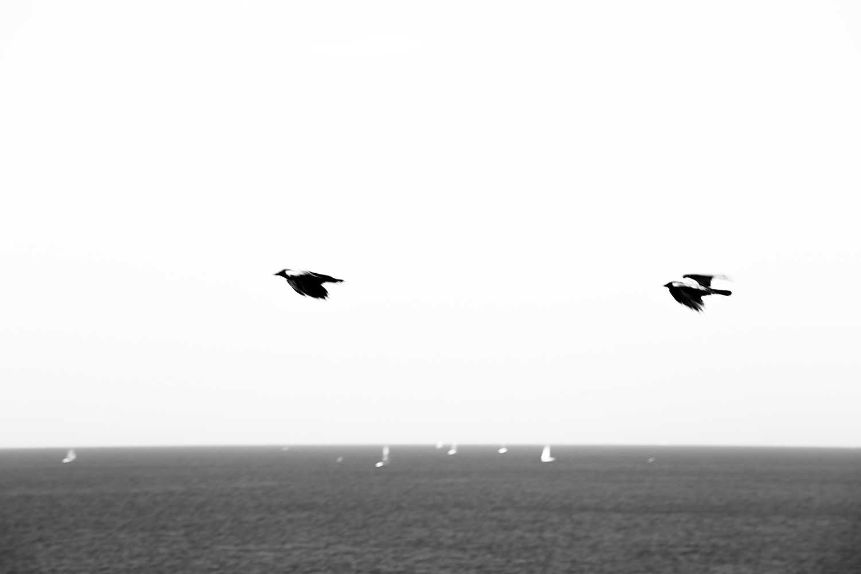 שני עורבים ושבע סירות מפרש. חוף נתניה